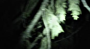 Blair Witch 2016 1080p BluRay DD5.1 x264-IDE screenshots
