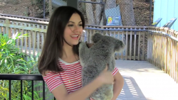 Victoria Justice - At Australia Zoo re-up