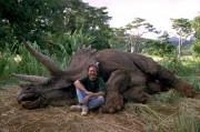 Парк Юрского периода / Jurassic Park (Сэм Нил, Джефф Голдблюм, Лора Дерн, 1993)  54569a525637583