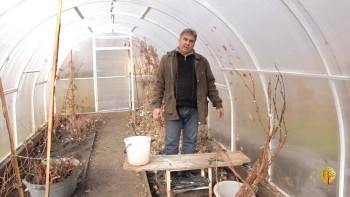 Проращивание черенков, выращивание винограда (2016) Вебинар